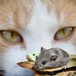 600px-cat-mouse